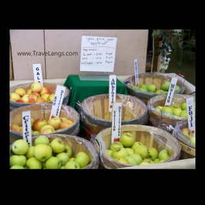 Apple varieties at Steele Orchard with the TraveLangs